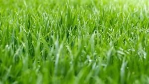clean-grass