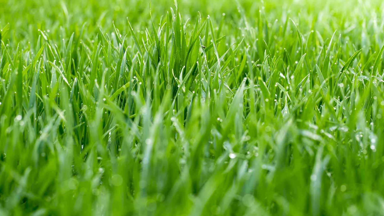 Image of clean grass